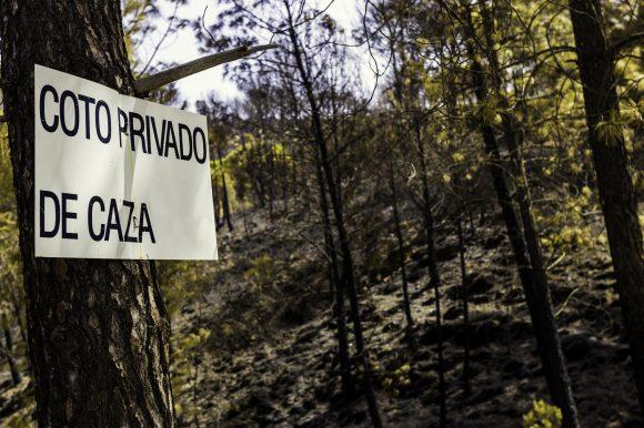 El Ayuntamiento de Saldaña saca a licitación tres cotos de caza